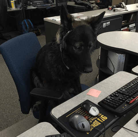 Dispatching Dog